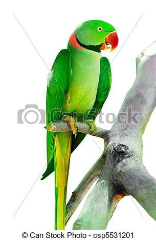Parakeet clipart perch Photography  on bird Colourful
