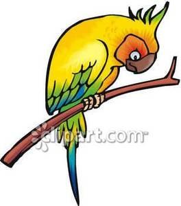 Parakeet clipart perch Perch%20clipart Images Panda Free Clipart