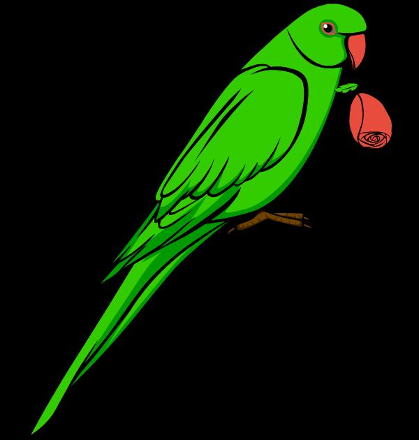 Parrot clipart #12