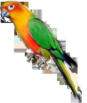 Parrot clipart #14