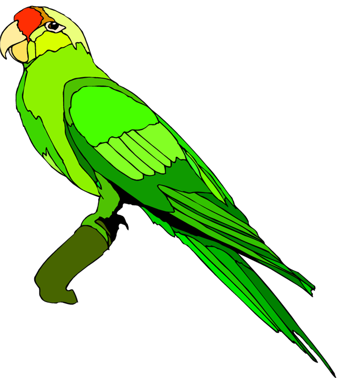 Parrot clipart Clipartion And com Parrot Clipart