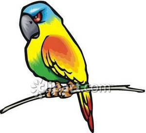 Parrot clipart angry Parrot Picture Royalty Picture Clipart