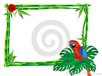 Parrot clipart south america culture Clipart bamboo Border sitting red