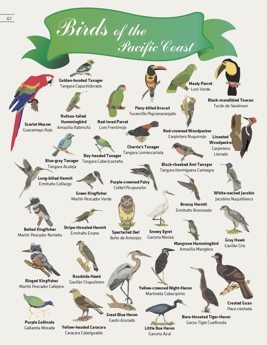 Parrot clipart costa rica The Bird Bird Coast Pacifica