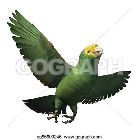 Parrot clipart double Amazon drawings #18 Download clipart