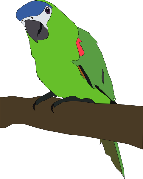 Parrot clipart double Amazon drawings #16 Download clipart