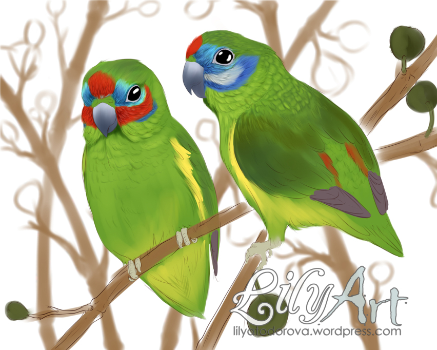 Parrot clipart double Double WIP Parrot Lily Fig