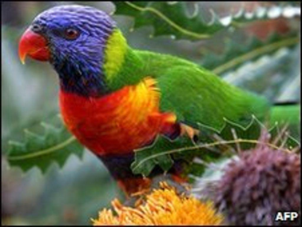 Parrot clipart drunk News hundreds bbc drunk of