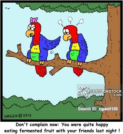 Parrot clipart drunk Cartoons 7 Bird 22 of