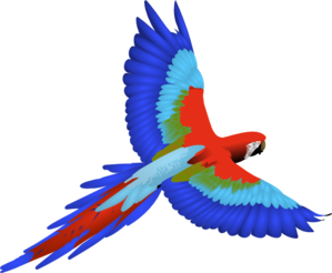 Parrot clipart for kid #md Flying Flying parrot Clipart