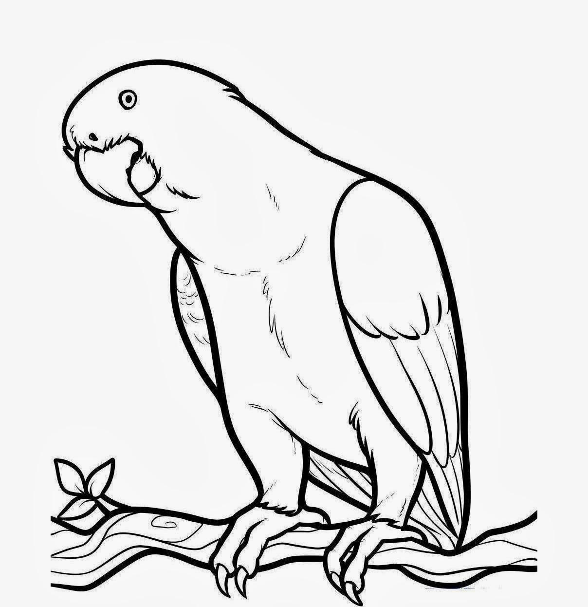 Parrot clipart parrot bird Download Parrot Parrot collection outline