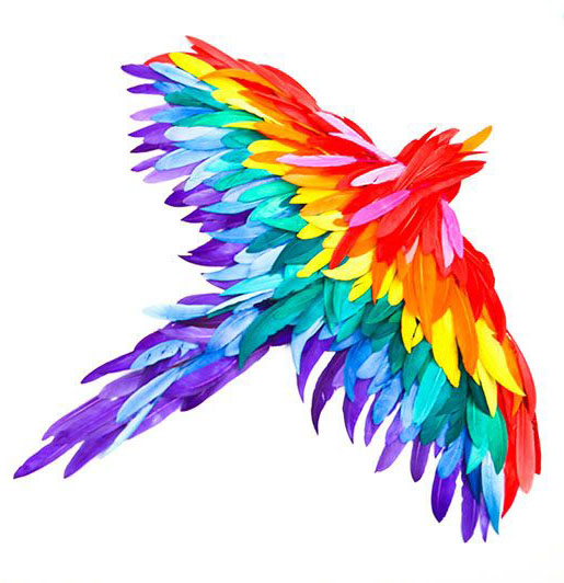 Parrot clipart rainbow color Bird Result All Rainbow colors