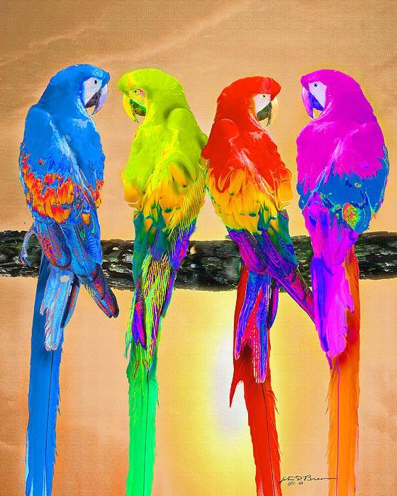 Parrot clipart rainbow color Colorful ideas Parrots 25+ Best