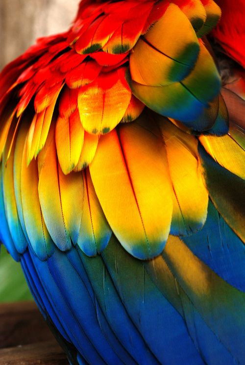 Parrot clipart rainbow color Of parrots on had Colorful