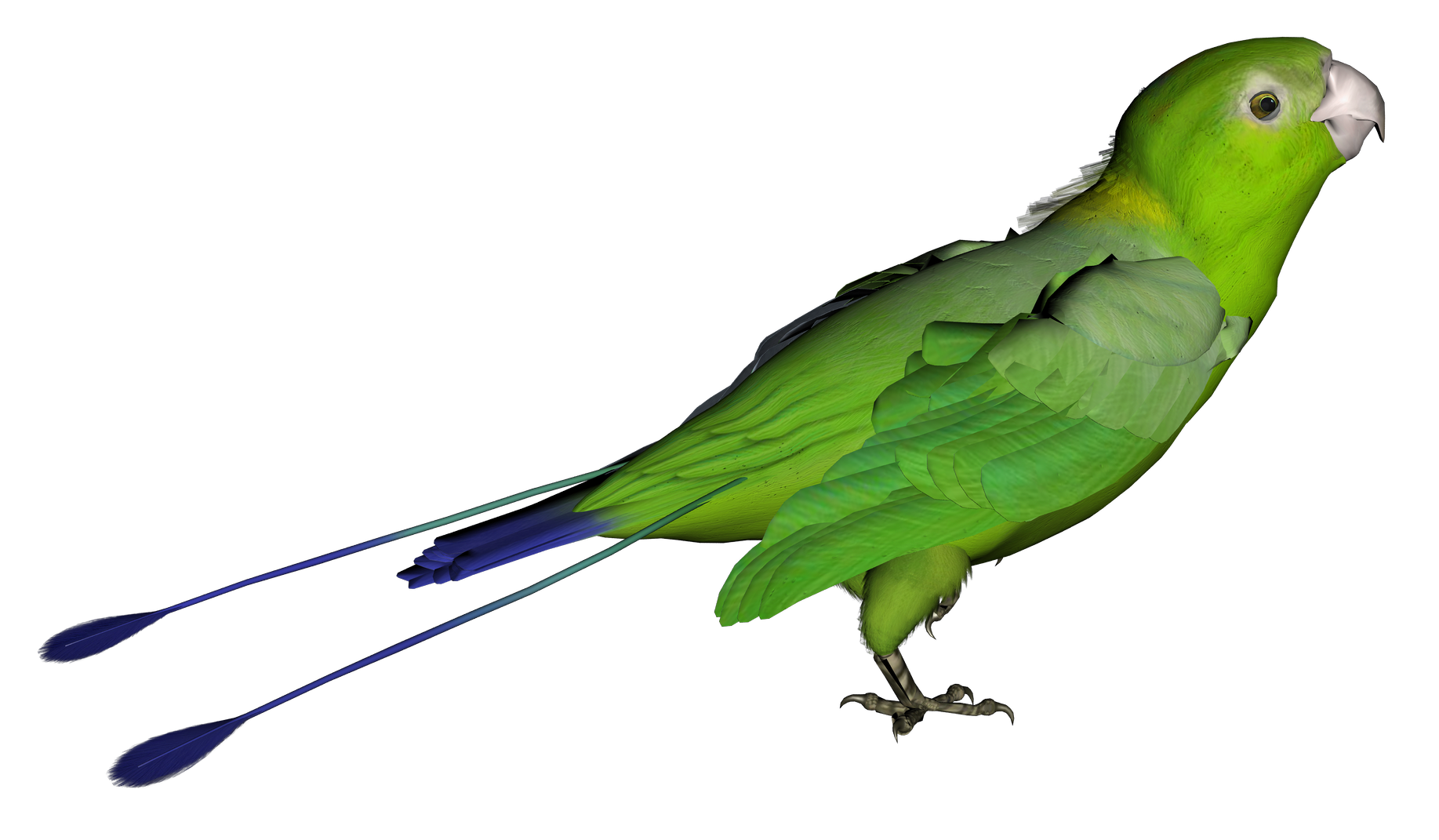 Parrot clipart real Parrots About Advertisement Facts All