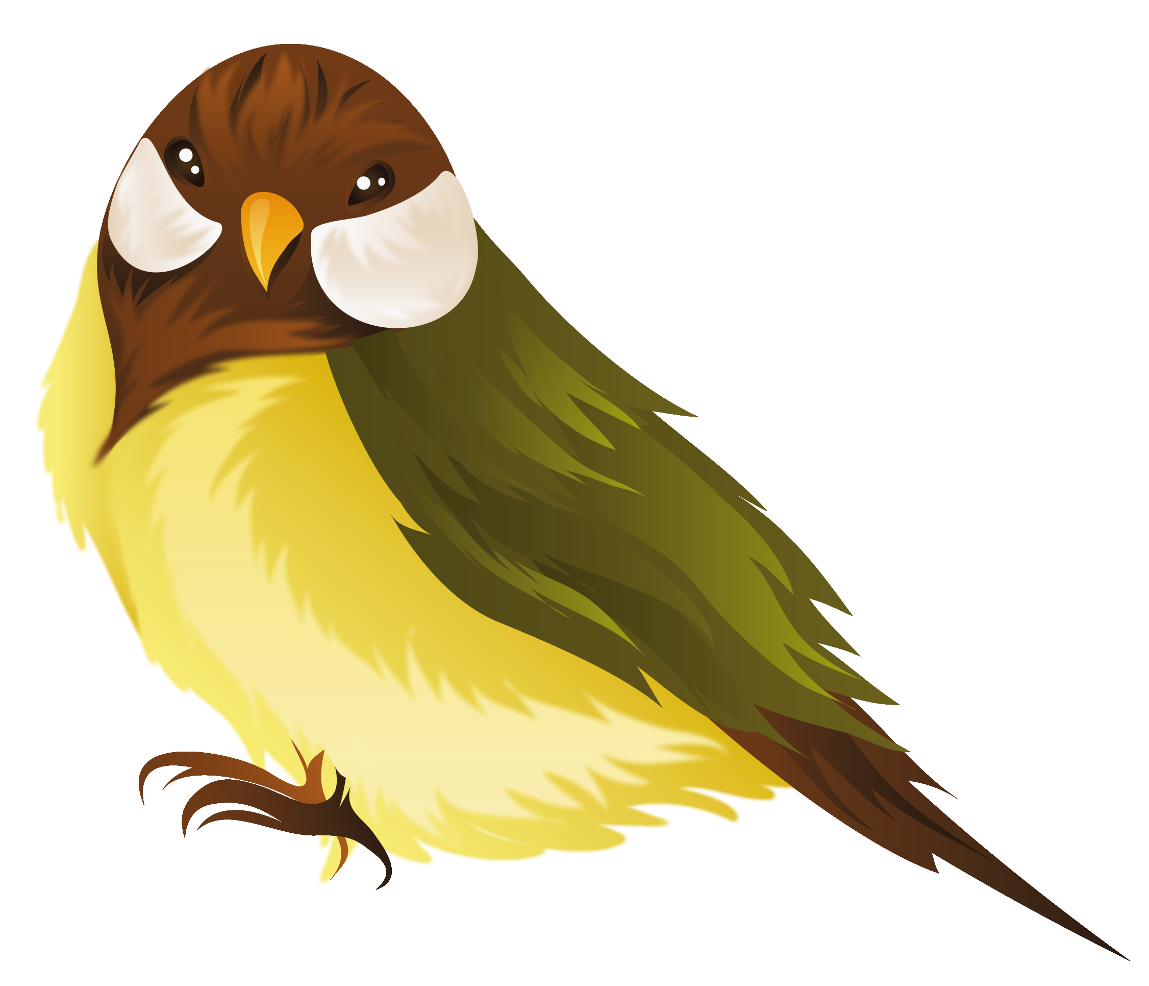 Parrot clipart real Png Birds Real Real birds