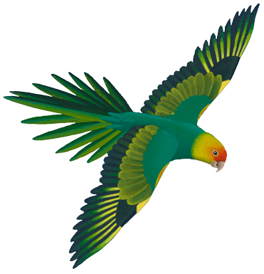 Parrot clipart real Parrot share we It Parakeet