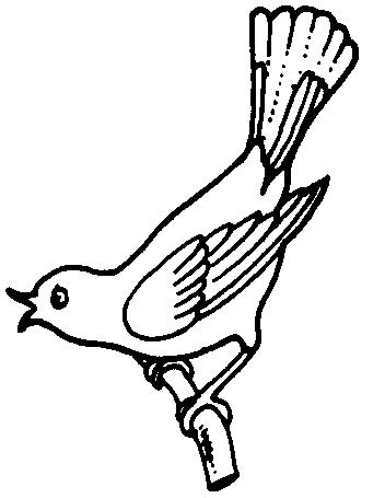 Brds clipart black and white Bird  white clipart white