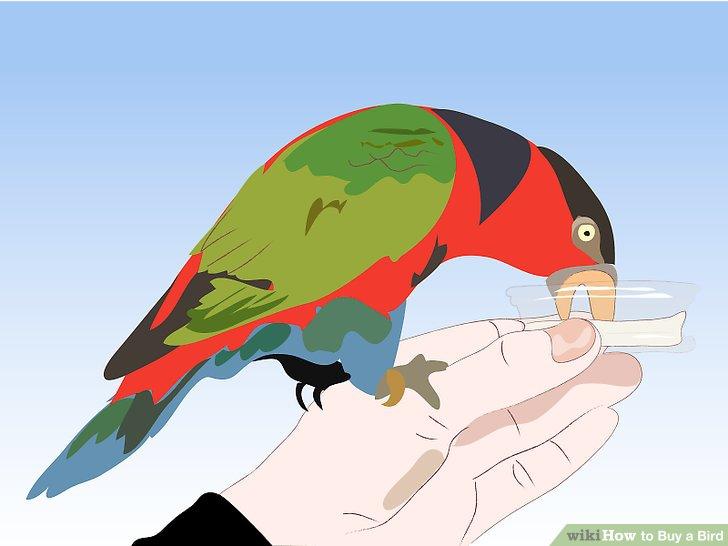 Parrot clipart talking bird Bird Buy How 3 Pictures)