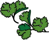 Parsley clipart oregano Graphics Fresh Parsley Clip found