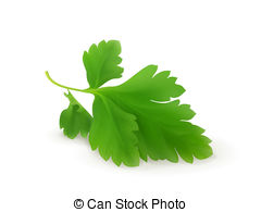 Parsley clipart oregano 879 Parsley Illustrations and