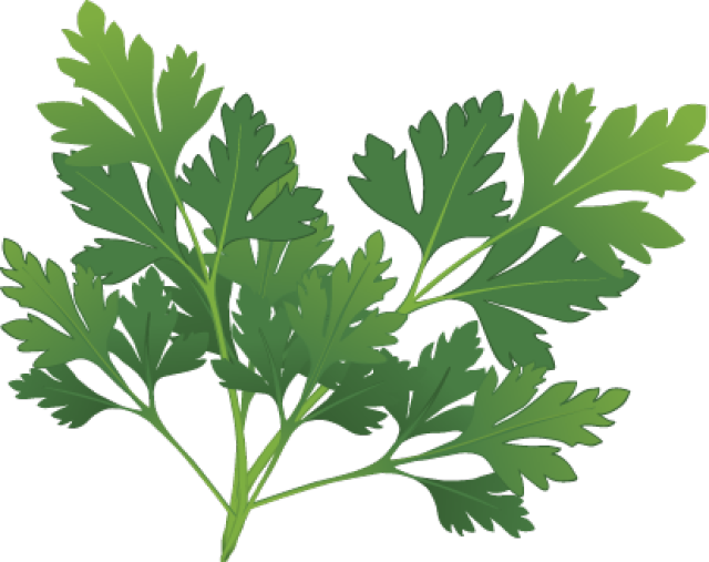 Parsley clipart oregano Herbs Spices and Herbs: Clip