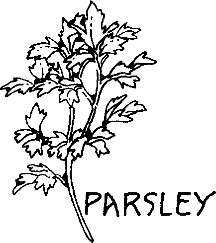 Parsley clipart black and white #4