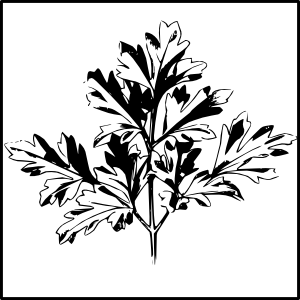 Parsley clipart black and white #2