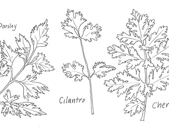 Parsley clipart black and white #7