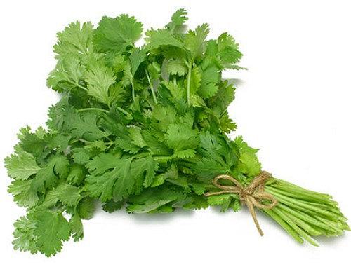 Parsley clipart cilantro Parsley Chinese Parsley Etsy Herbs