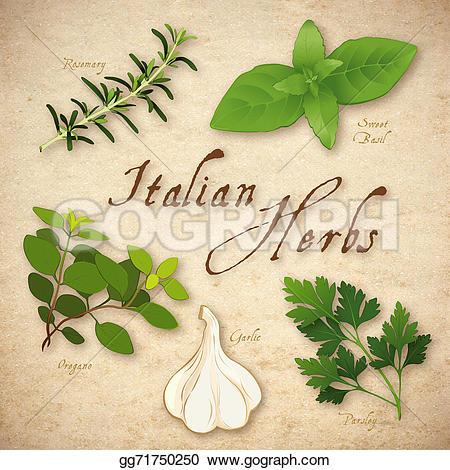 Parsley clipart italian Italian basil Stock Italian sweet