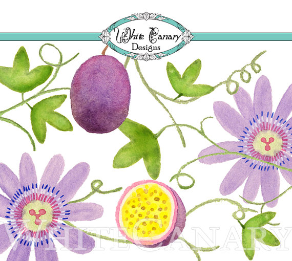 Passion Flower clipart Download Watercolor Clipart to Clipart