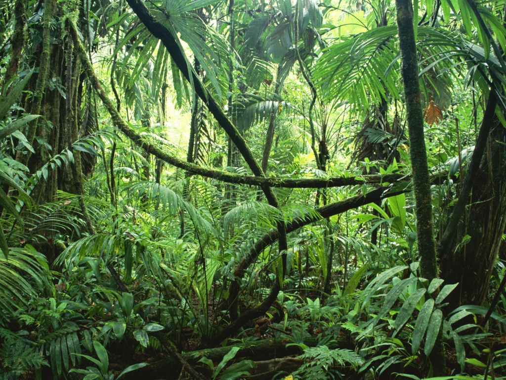 Path clipart jungle Path Cliparts Cliparts Clipart Desktop