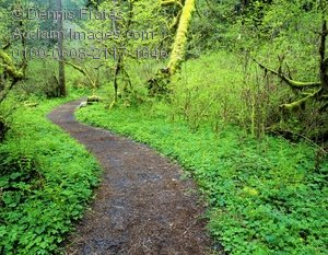 Pathway clipart nature trail · path clipart stock photos