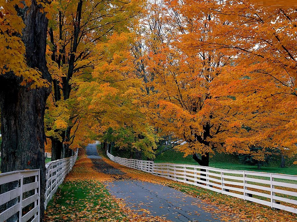 Pathway clipart road scene Clip free wallpaper Fall