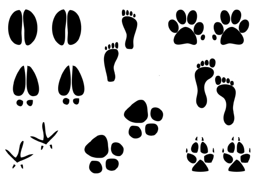 Paw clipart animal foot Paw paw paw of humans