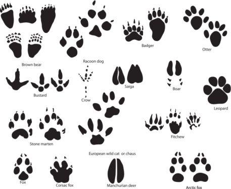 Paw clipart cub scouts Art print animal Cub tattoo