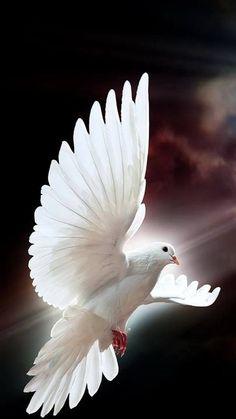 Peace Dove clipart air animal #14