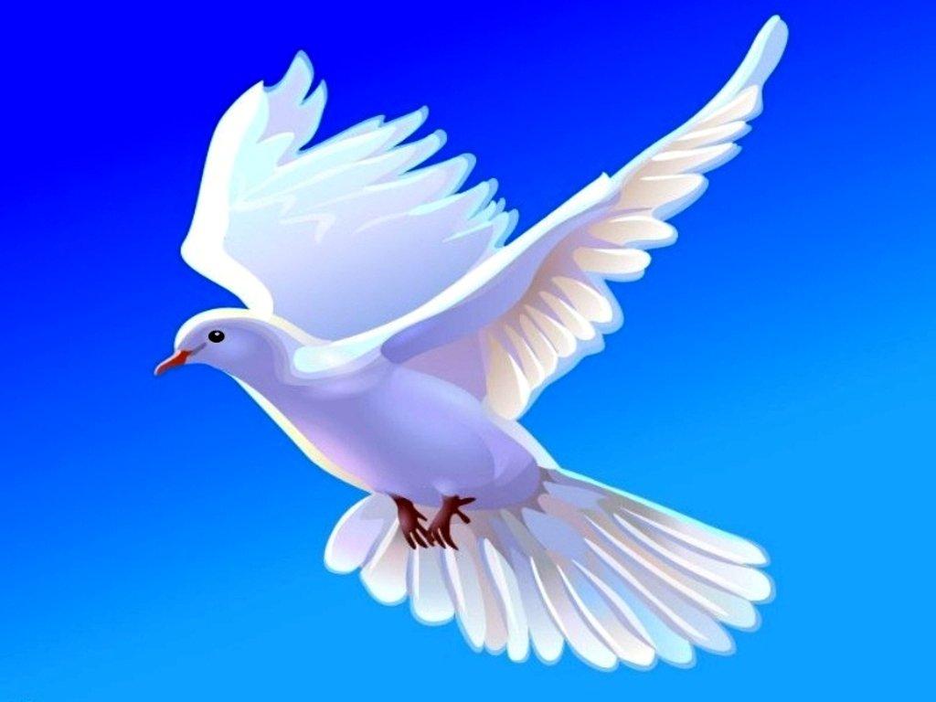 Peace Dove clipart air animal #8