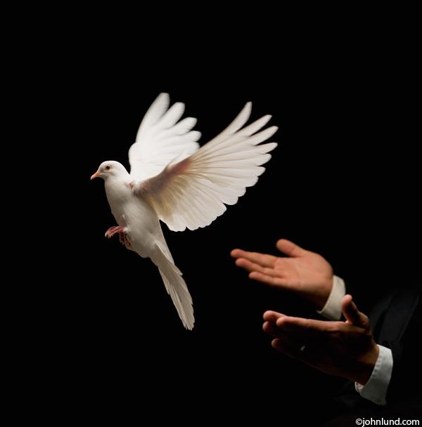 Peace Dove clipart air animal #13
