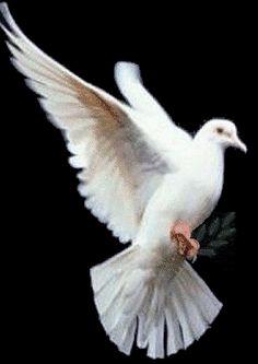 Peace Dove clipart air animal #15