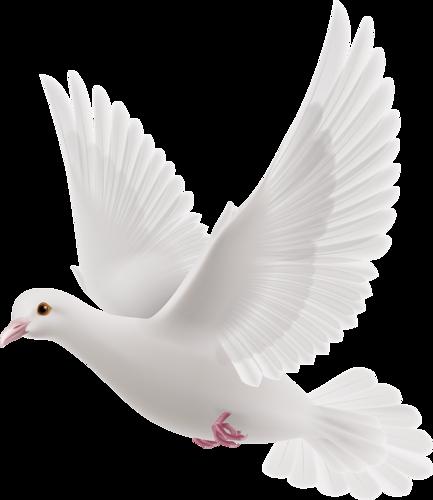 Peace Dove clipart air animal #9