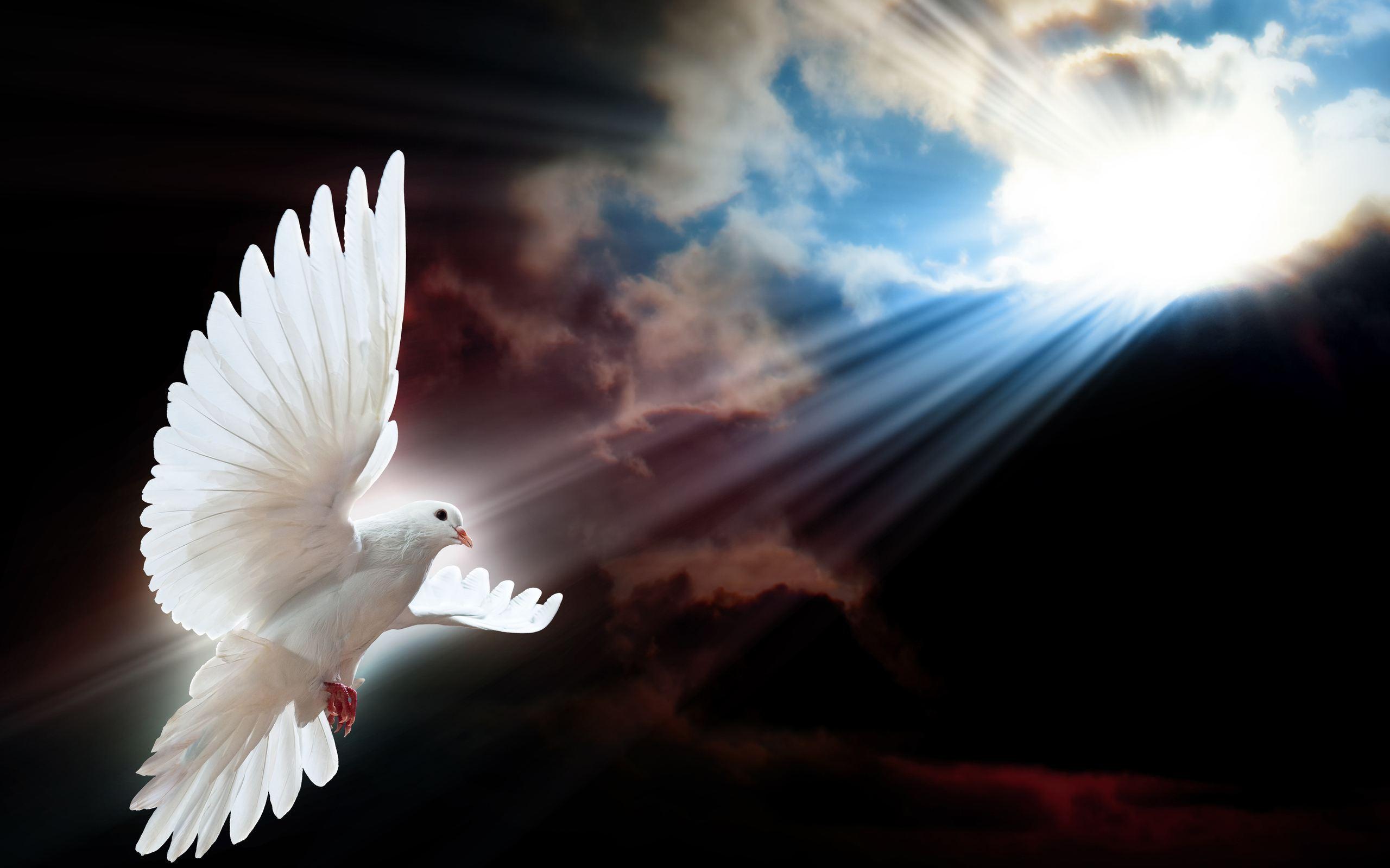 Peace Dove clipart air animal #12