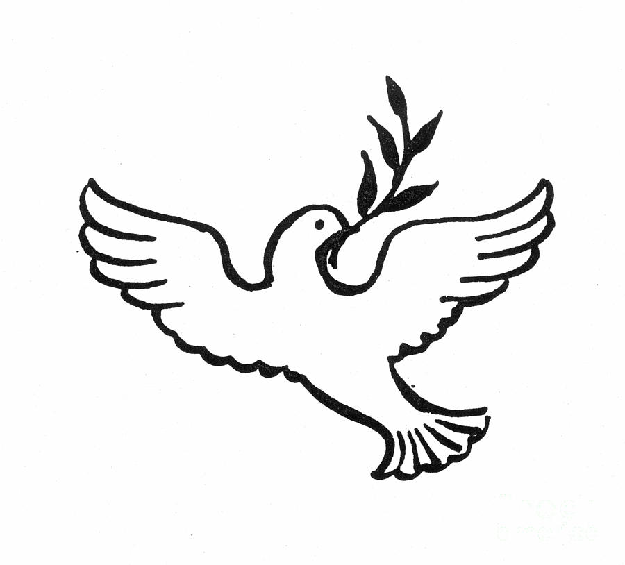 Peace Dove clipart line drawing #10
