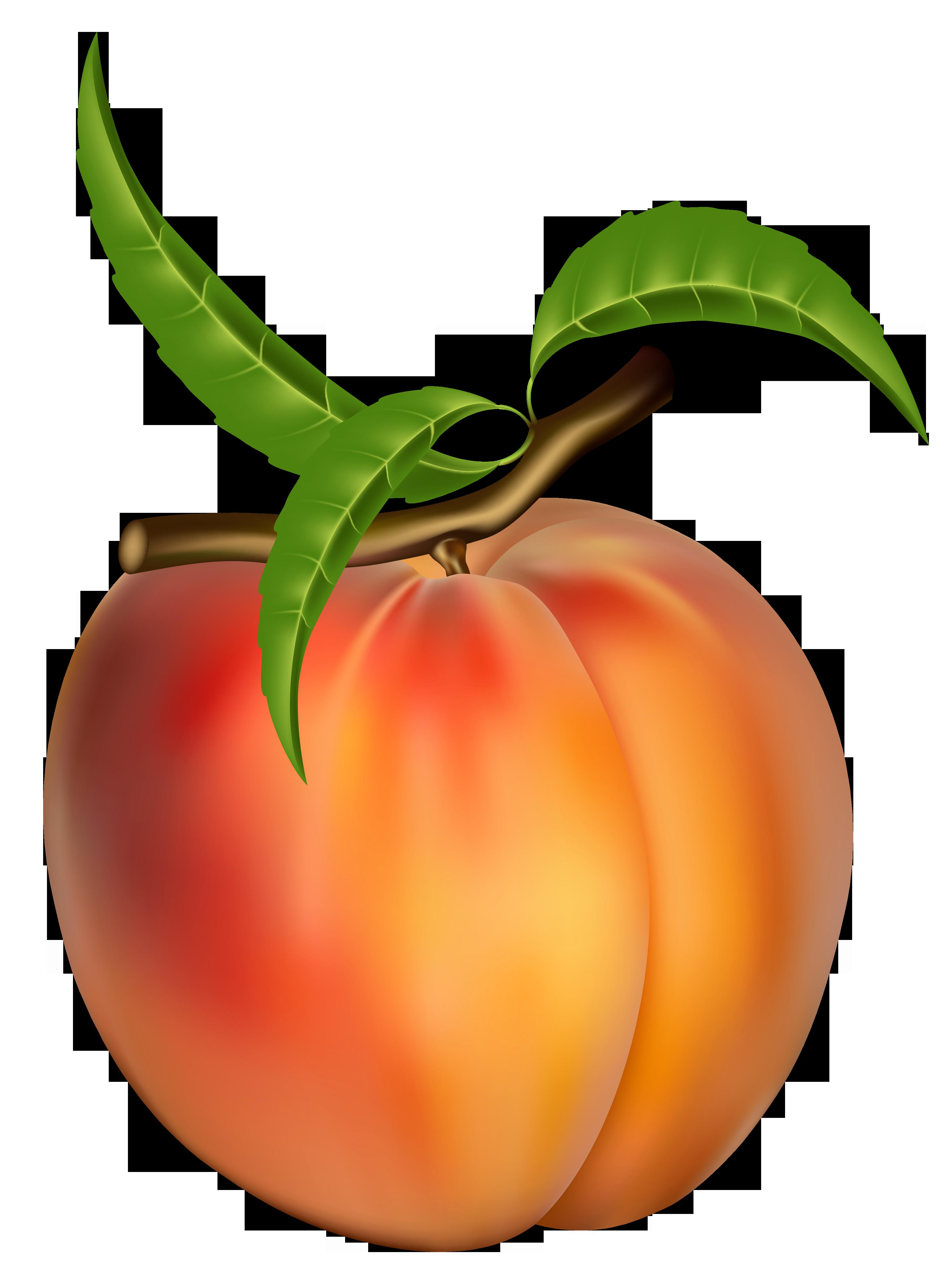 Peach clipart Clip Clip Art free art