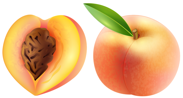 Peach clipart single fruit Peach art Free clip Peach