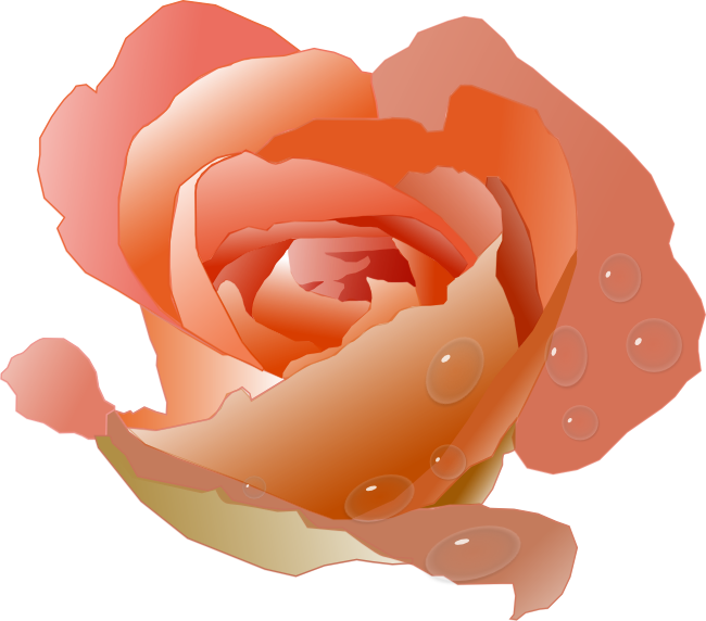 Pink Rose clipart animated Peach beautiful with Clipart giving