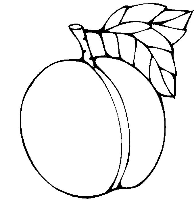 Peach clipart coloring × and 744 2 more