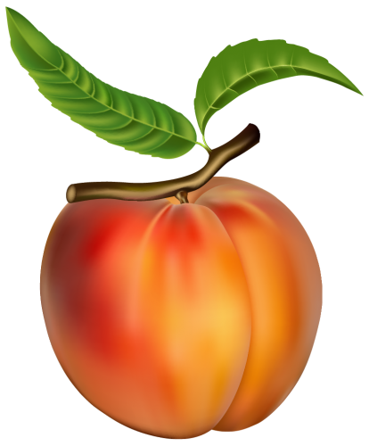 Peach clipart orange fruit And PNG Clipart Clipart PNG