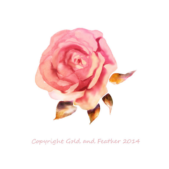 Pink Rose clipart pink gold Rose your Watercolour Dusky by